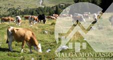 malga_montasio_226x120